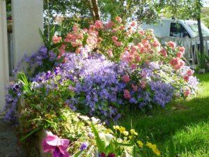 giardino affittacamere pisa